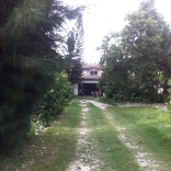 The driveway leading up to the house.