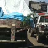 A truck broke down on the main route in Port-au-Prince causing quite the traffic jam. The branch on the back signifies to other drivers that the vehicle is out of order.