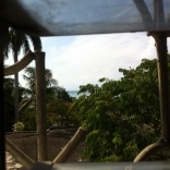 A view from the incubators window. That's the Caribbean in the background.